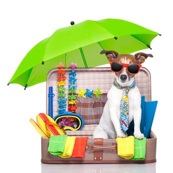 Vacanze con il cane e con il gatto, istruzioni per l'uso